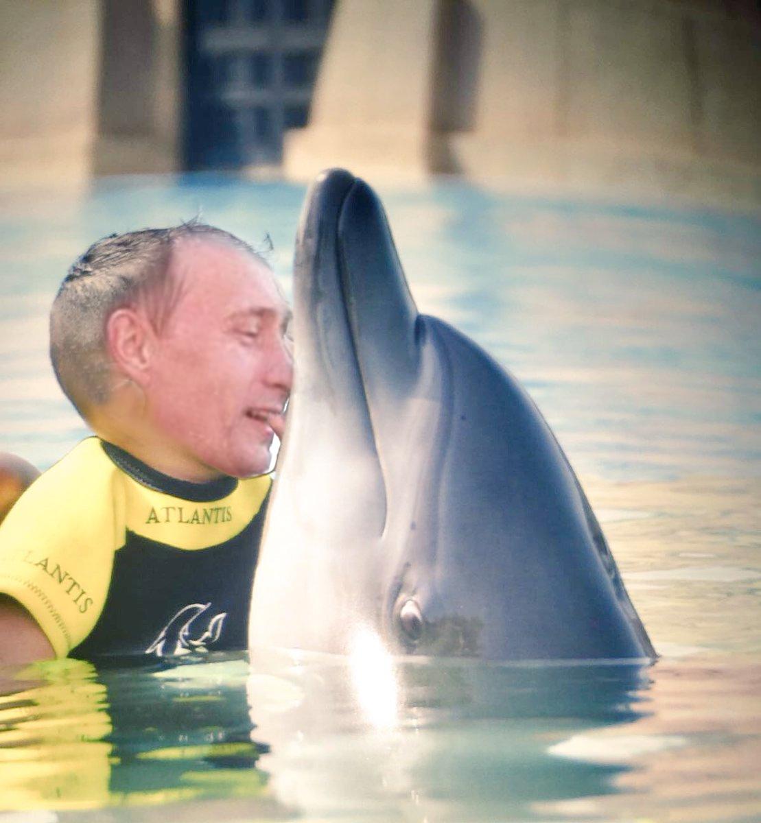 Dolphin Kid